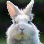 "New ransomware ""Bad Rabbit"" hits Russia and Ukraine"
